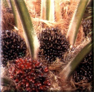 Business economy - crude palm oil (CPO)