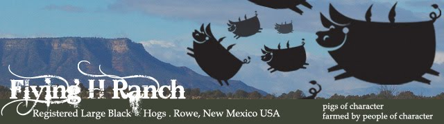 Flying H Ranch - Large Black Hogs, Pastured Pork, Artisan Pork, Heritage Pork, Rowe NM   USA