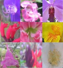 Flora pelbagai warna