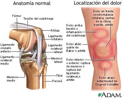 Educación Física en la Red: Articulación de la rodilla: Meniscos ...