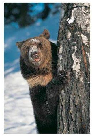 [gonna+be+a+bear_edited-1.jpgpic]