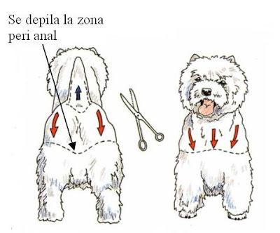 Se el estilista de tu perro de manera fácil económica y
