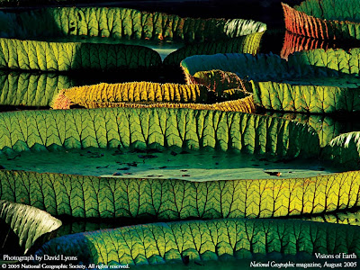hd nature wallpapers. widescreen wallpaper hd nature