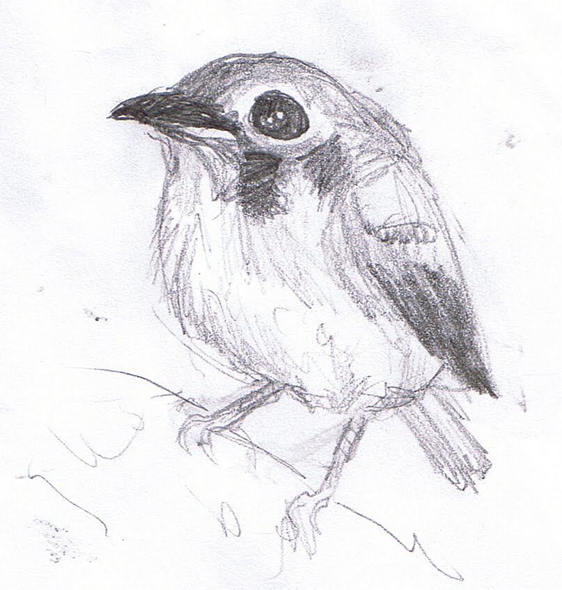 sketches of birds. ird sketches
