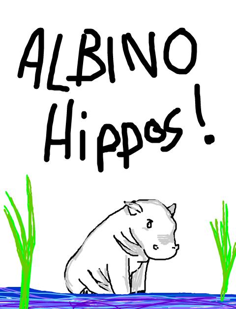 Albino Hippo