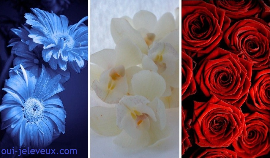 Bonne Vendredi - Journée de Souvenir Drapeau+fleurs+bleu+blanc+rouge+14+juillet+fete+nationale+2