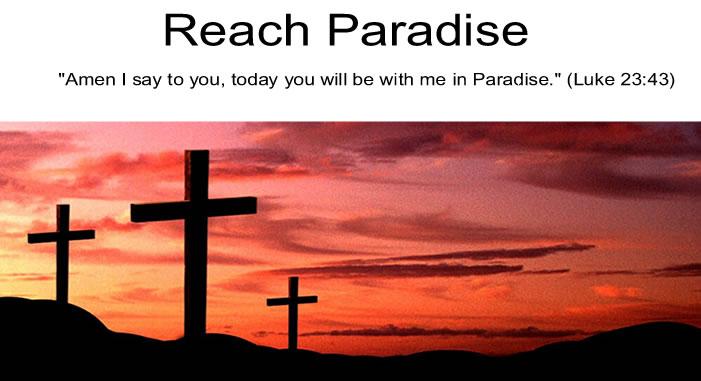 Reach Paradise
