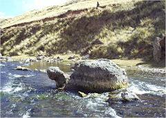 La Tortuga Petrificada JAYLLAHUA - MACARI