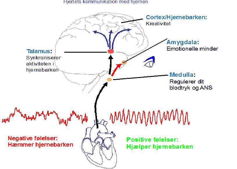 stress og hjernen