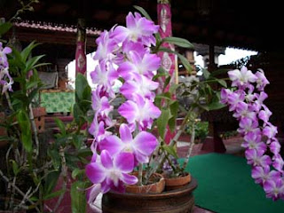 nice orchid, bali mode house, ayu house