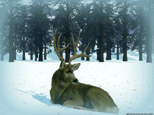 Reno sentado en la nieve