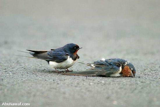 love_birds3.jpg