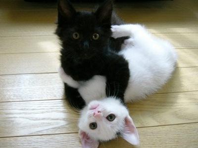 [cat1]