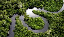 Artistas pedem fim da devastação na Amazônia.