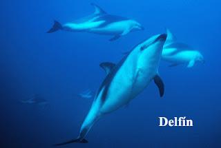 dolphin in Valdes Peninsula Patagonia