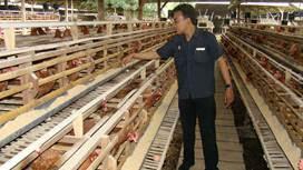 S.J. Farm