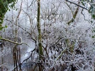 [snowy+creek]