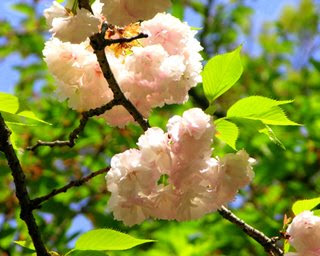 Remedios aromaterapeuticos para realzar la energia durante el embarazo Flowers+in+Japan