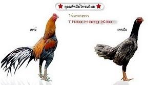 AYAM BANGKOK: NAMA AYAM SABUNG DI THAILAND
