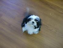 My Baby Boy Oreo