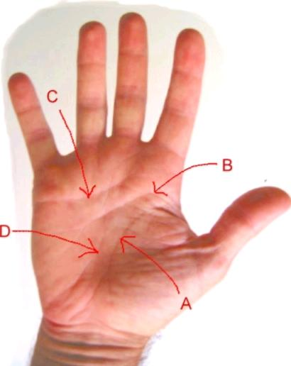 Hand Palm Readingpalm Reading September 2010