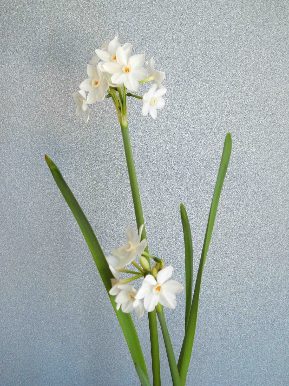 Gonna Stuff A Chicken Eau De Paper White Narcissus