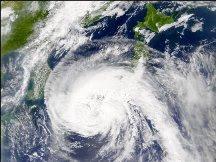 typhoon over China's akoya industry