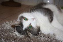 Vår katt Maumau