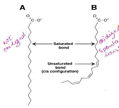 trans fat vs saturated fat № 80340