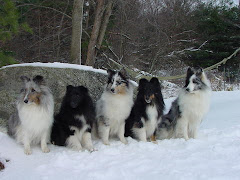 Landslyde Shelties