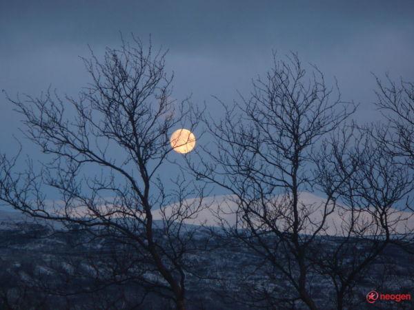Sonata Lunii!