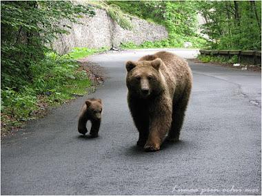Unde mergem,mama?