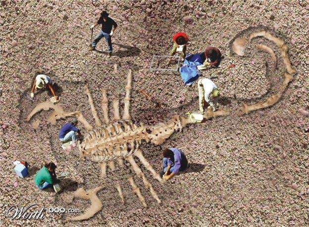 Biggest scorpion in the world - photo#19