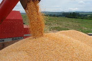 Carretas com carga de milho são apreendidas em Cristalina