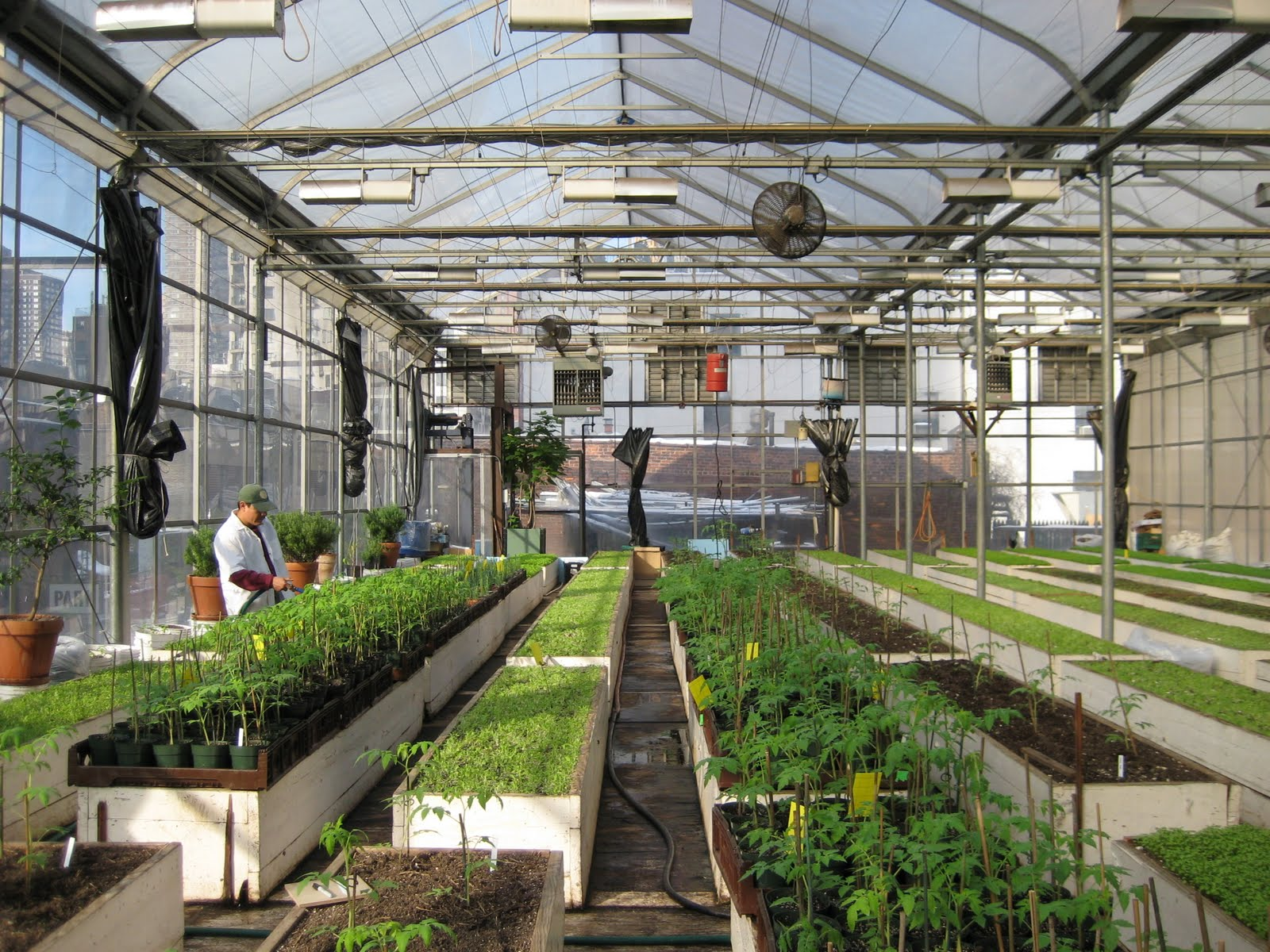 The greenhouse nyc