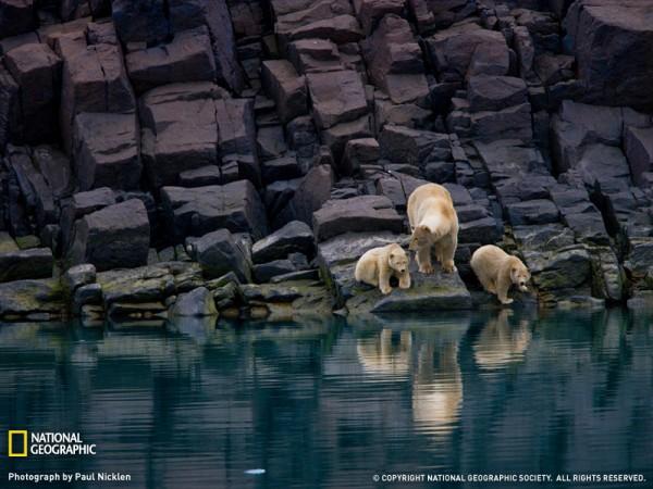 polar-bears-svalbard-1205962-sw