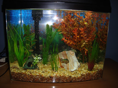 Betta Fish Tanks on Betta Tank Filter Current     Checking Out The Minibow 5 And The