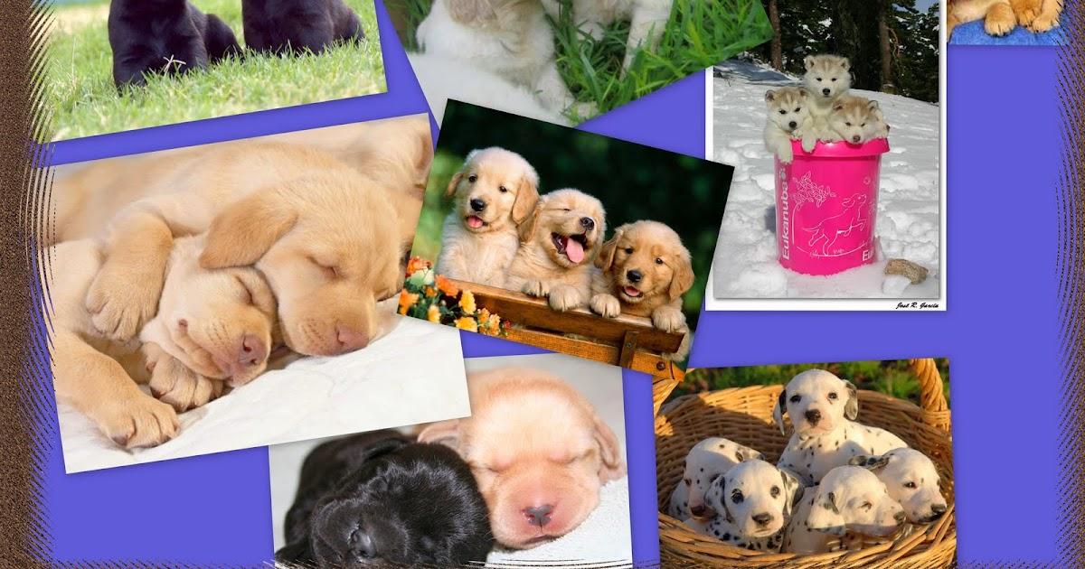 LDV INFORMATICA 4ºESOB: collage perros marco