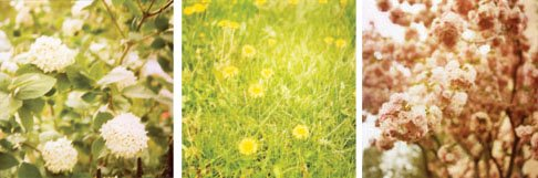 [bloom_heather]