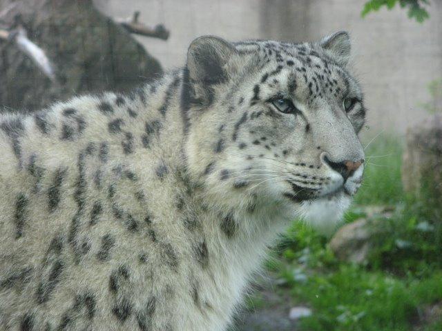 2 Juillet, 2009 - Zoo Granby