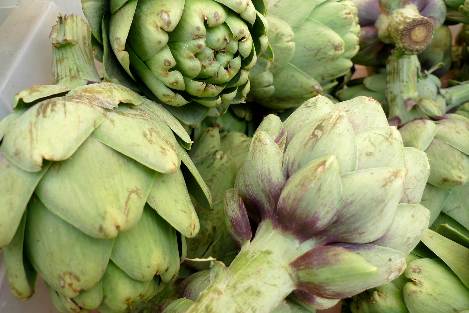 The spice doc edible and medicinal flowers -  Artichoke Flower