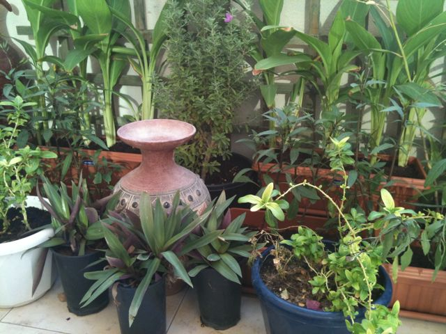 High Quality Clueless Gardener In Dubai Awesome Ideas