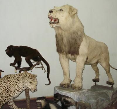 Зимний дворец Богдо хана. Диковинные коллекции