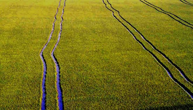 Linhas paralelas