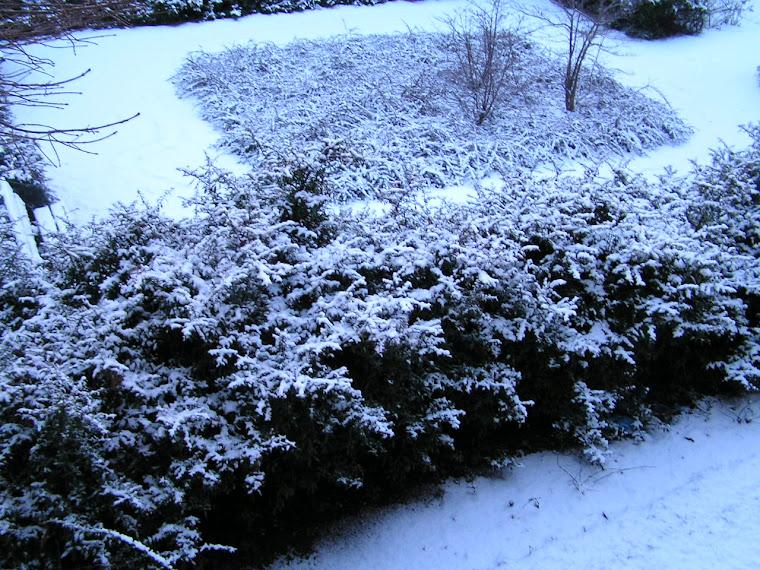hoje de manha(29/01/2010)