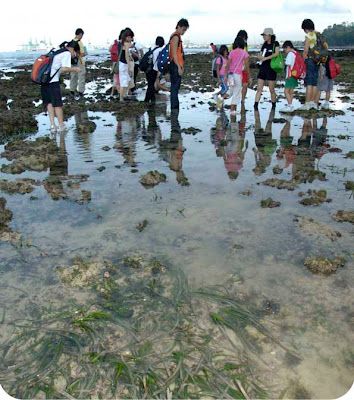 Visitors exploring Sentosa's shores with the Naked Hermit Crabs