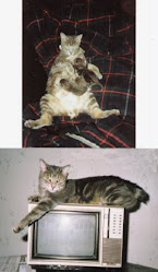 Schwanzlos, Our Bobtail (1987-2003)