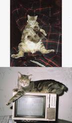 Schwanzlos, Our Bobtail (1987-2003)