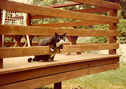 Tippy (1978-1996)