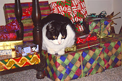 Another kitty that knows she&#39;s a present!